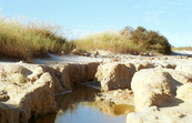 A Water Pool in a Salinity Affected Area [ID:129]