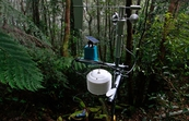 CSIRO sensors uncovering the microclimatic conditions favourable for rapid natural regeneration of degraded rainforest environments