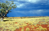 Spinifex Plain