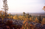 Autumn Colours of the Lapland Forests
