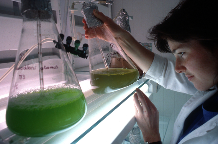 Microalgae Collection