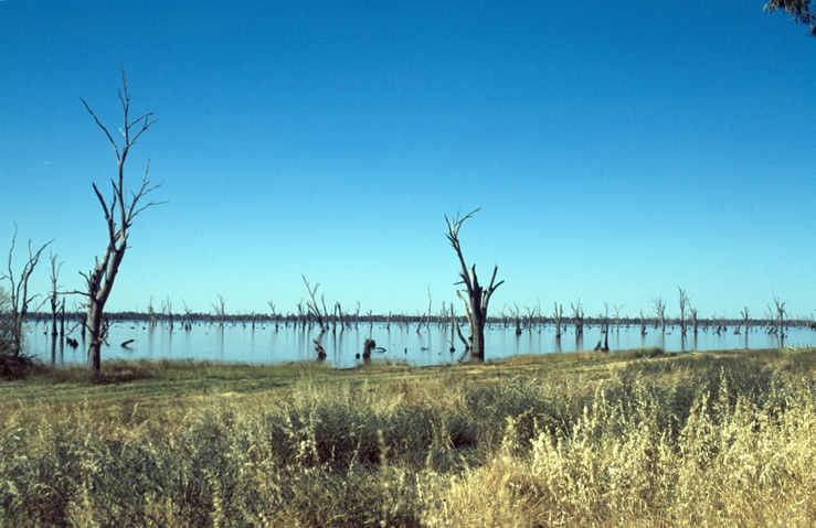 Dead trees in lake