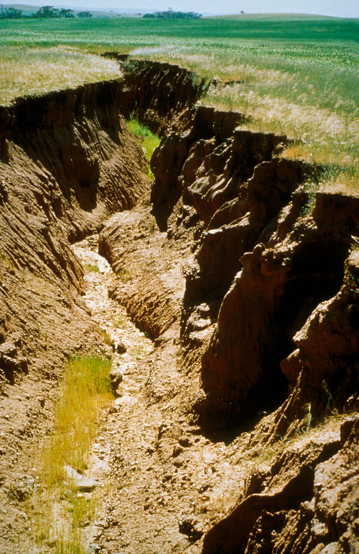 Gully erosion in the Warren Catchment, east of Adelaide in t...