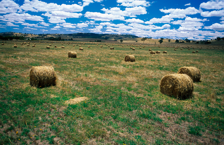 Bales of oaten hay near Albury, NSW.