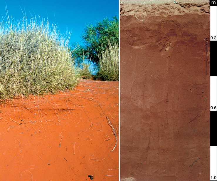 Red-Orthic Tenosol soil profile located 110 km south south-w...