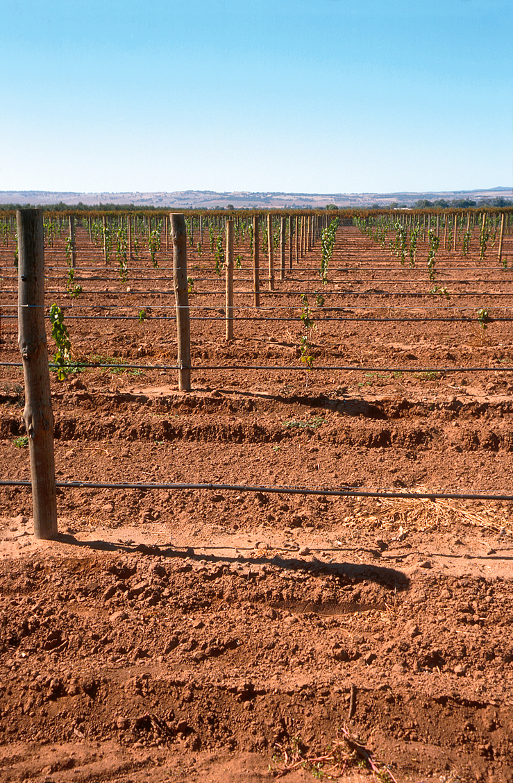 Drip irrigation installed at new vineyards near Angle Vale, ...