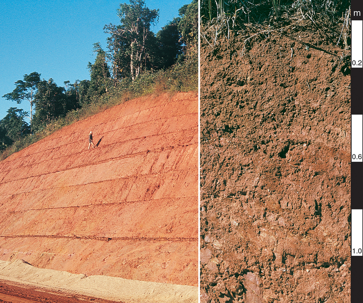 Red Dermosol soil profile in the Atherton Tablelands, north ...