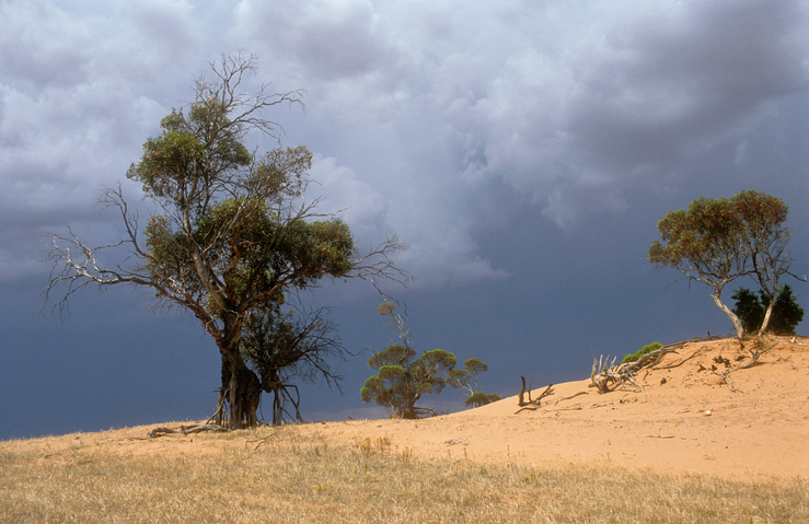 Dune erosion near Balaklava, north of Adelaide, South Austra...