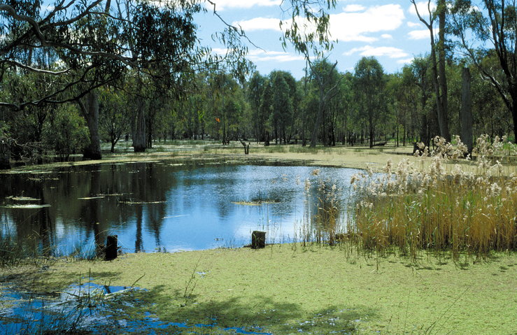Barmah forest wetland, VIC