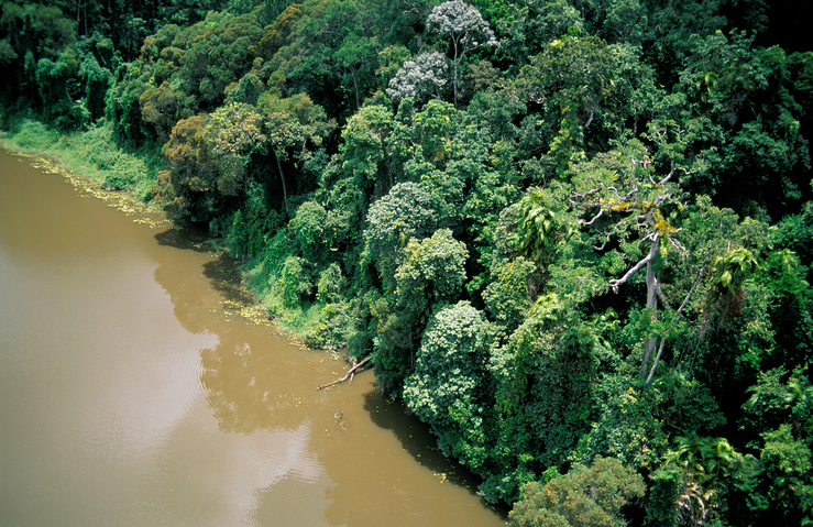 Aerial view of tropical rainforest adjoining the Barron Rive...