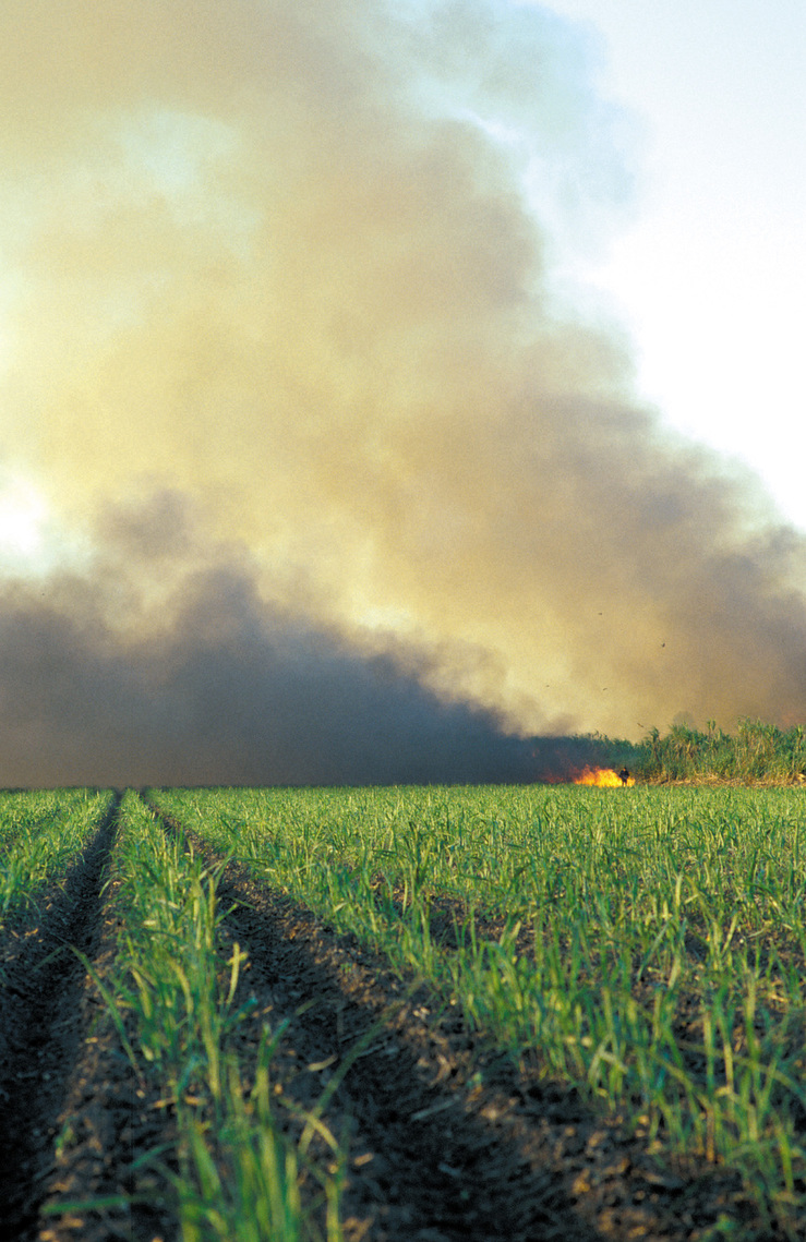 Burning sugar cane prior to harvesting at Frank Baletta's fa...