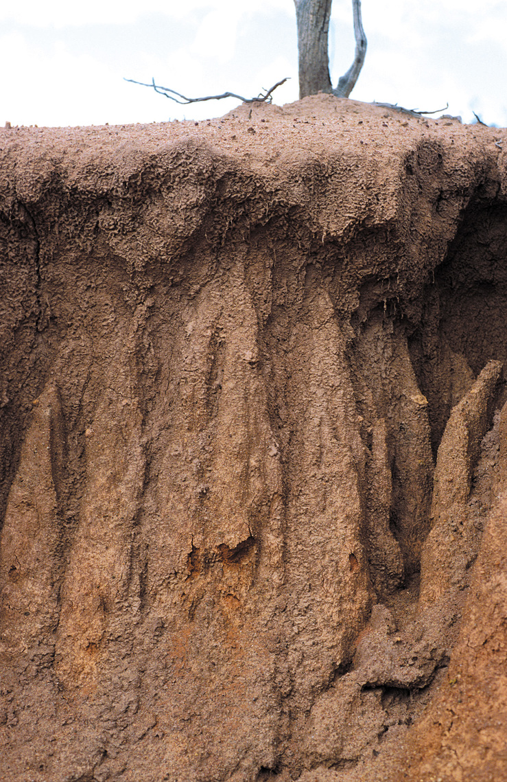 Closeup view of gully soil profile, the result of dryland sa...