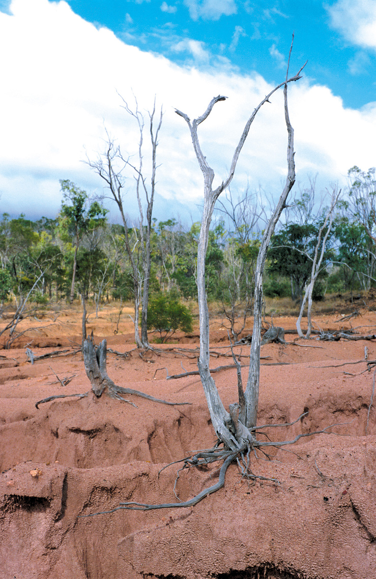 Dead trees and tree stumps with exposed roots remain precari...