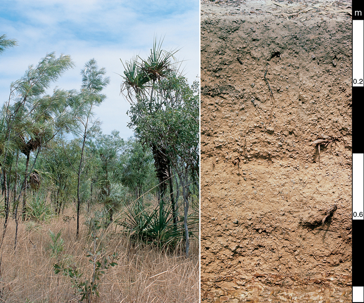Brown Kandosol soil profile in the Darwin district, Northern...
