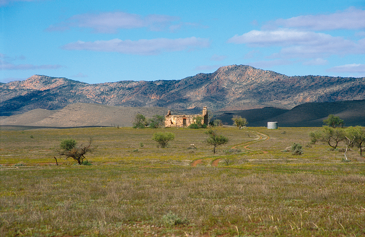 Abandoned homestead north of Hawker on the western edge of t...
