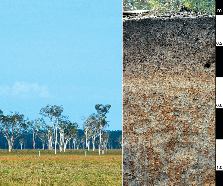 Redoxic Hydrosol soil profile in the Ingham-Cardwell area of...