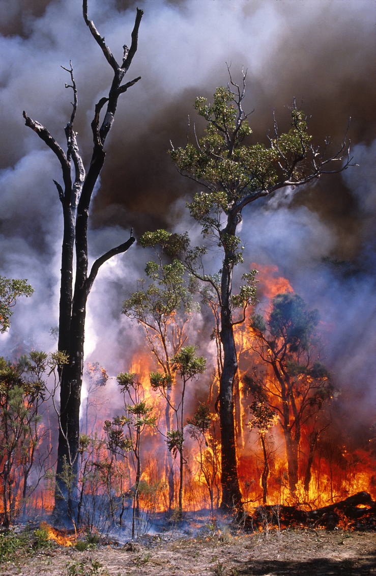 Experimental Burning of Bushland