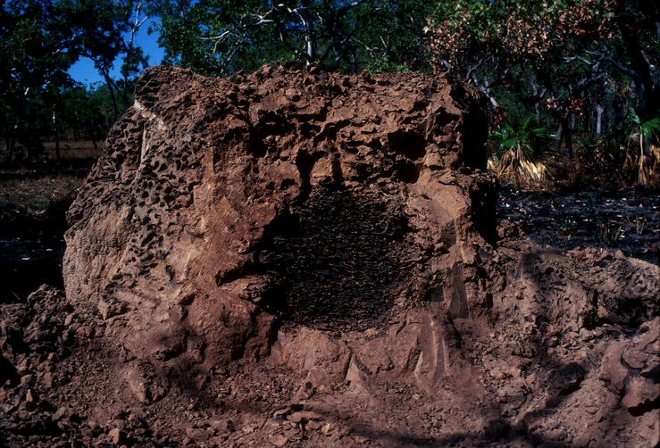 A Damaged Termite Mound
