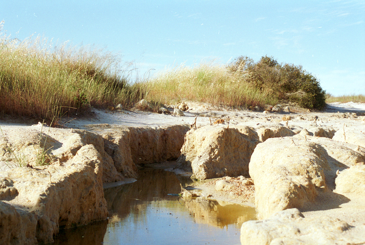A Water Pool in a Salinity Affected Area