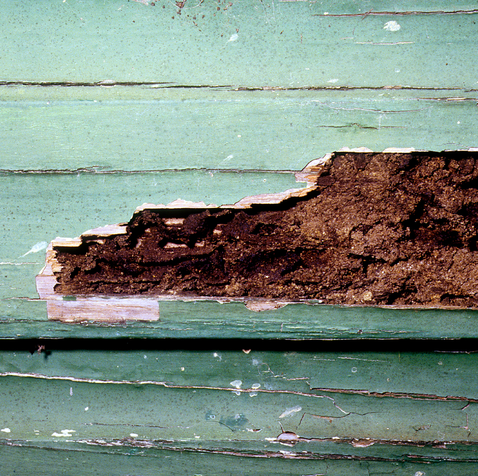 Termite Damaged Weatherboard