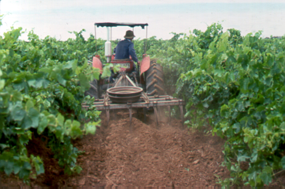 A Tractor Cultivating a Vineyard