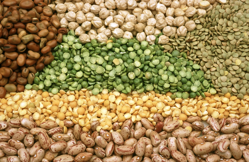 Pulses and legumes