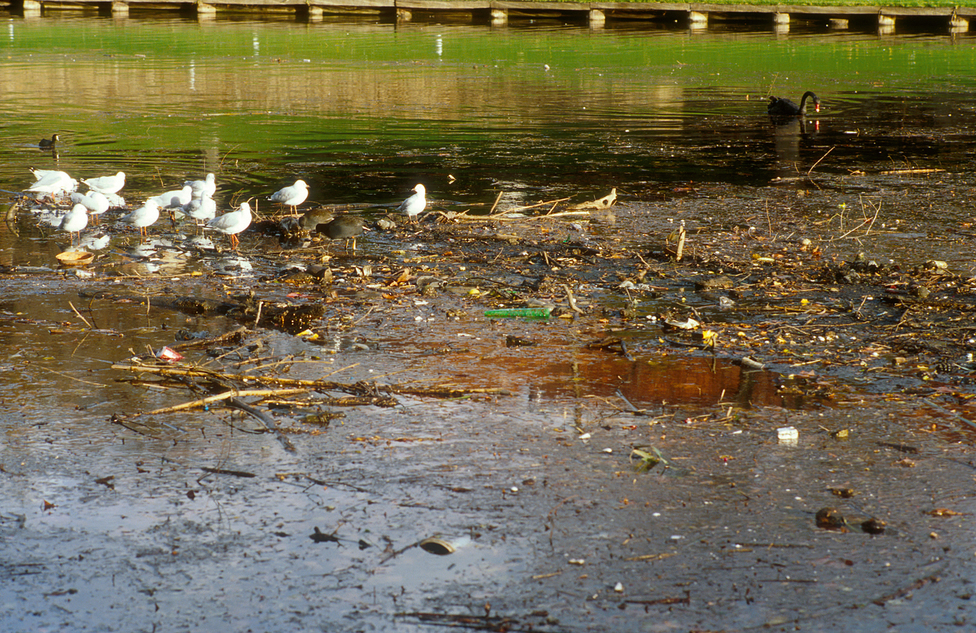Debris and pollution in the River Torrens