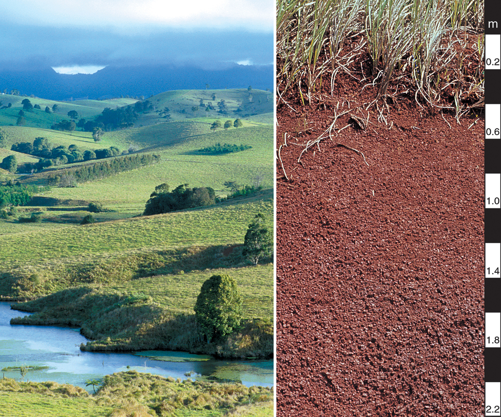 Red ferrosol soil profile in t csiro science image for Soil library
