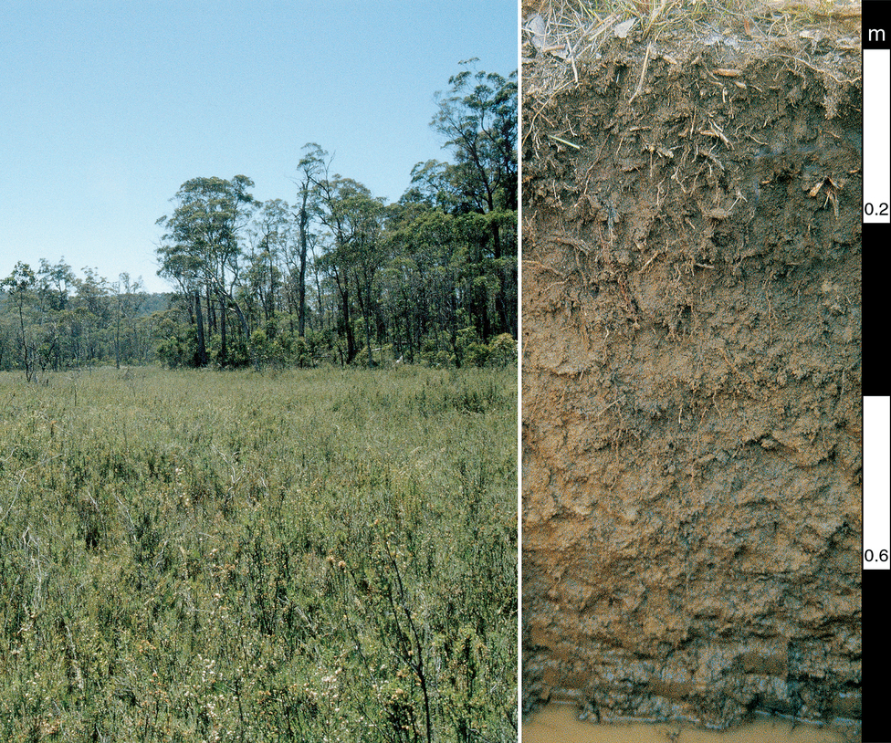 Redoxic Hydrosol soil profile at a subalpine site in Bago St...
