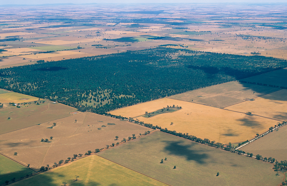 Aerial view of Lester State Forest and wheat farms near Coolamon