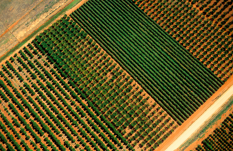 Aerial view of orange orchard and grape vines at Griffith, N...