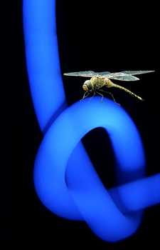 A dragonfly and a UV-illuminated rod of crosslinked recombinant resilin.