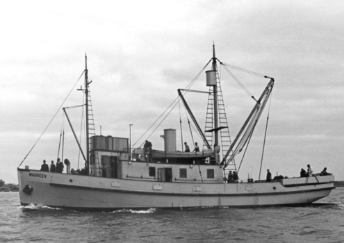 The Vessel MS Warreen