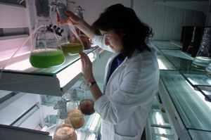 Microalgae Culture Collection