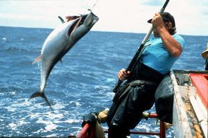 Tagging Bluefin Tuna