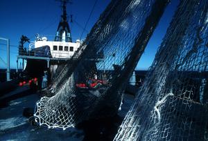 Nets on Deck