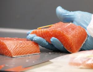Atlantic salmon processing