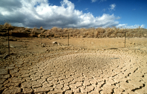 Drought affected landscape