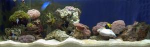 Aquarium at the CSIRO Discovery Centre