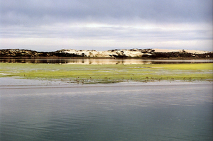 Sand dunes in the Coorong, South Australia, provide habitat for many key species.