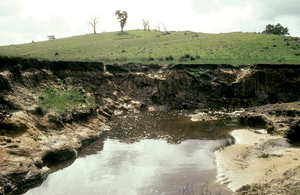 Eroded hillside in the Warren Catchment, east of Adelaide in the Mount Lofty Ranges, South Australia. 1992.