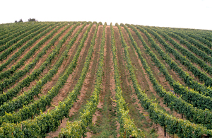 Grapevines in the Adelaide Hills, South Australia. 1992.