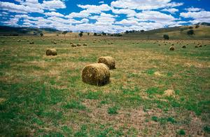 Bales of oaten hay near Albury, NSW.
