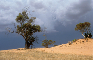 Dune erosion near Balaklava, north of Adelaide, South Australia. 1992.