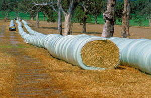 Wrapped round bales of oaten hay, Bega, NSW.