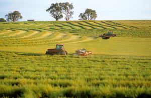 Harvesting canola near Binalong, NSW, December 2002.