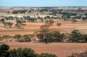 Landscape view of farmland near Bruce Rock in the Western Australian wheat belt. 1981.