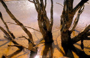 Dead trees in the Brukunga Pyrites Mine tailings dam, east of Adelaide in the Mount Lofty Ranges, South Australia. 1992.