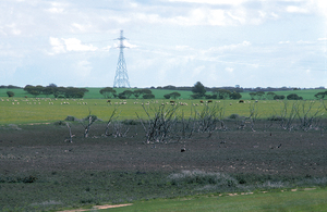 Saline depression on the Cooke Plains
