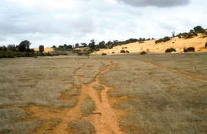 Area cleared of Mallee bushland for grazing and cropping on the Cooke Plains, south-east of Tailem Bend, SA. 1992.
